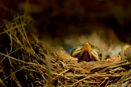 Sometimes they rested at the edge of the nest.