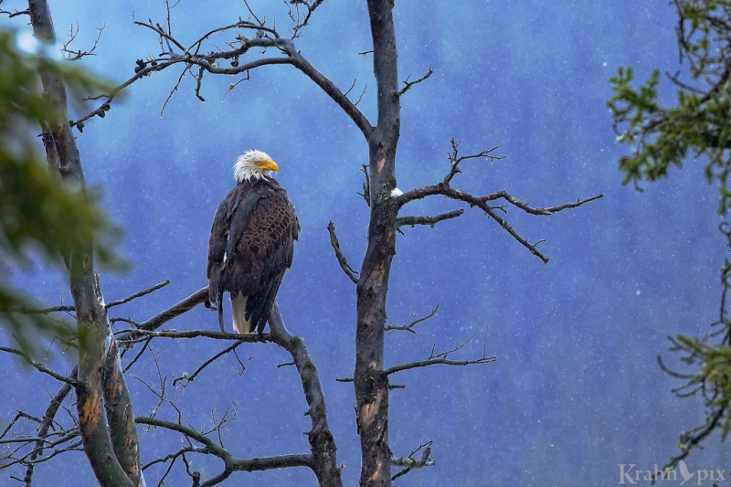 It turns out an eagle with its eyes open makes a much better photo.