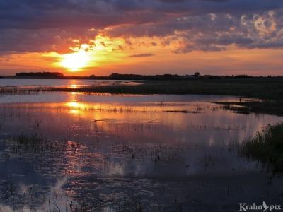 muskrat, water, sunset, Saskatchewan