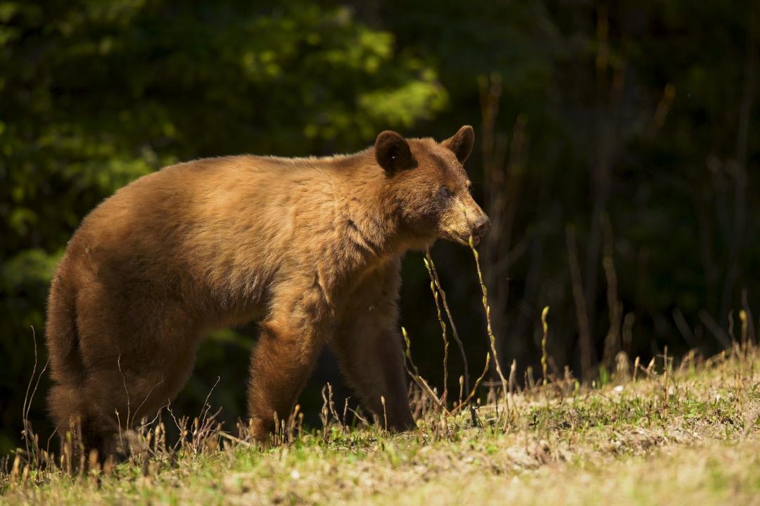_B5A0389, bear